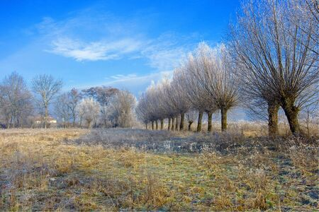 Trees covered by hoarfrost against a blue sky