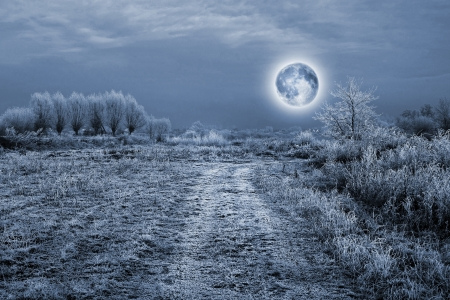Full moon over the trees covered by hoarfrost - night scene