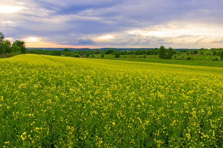 field and sunset -summer landscape  Stock Photo