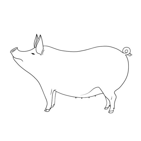 Line art farm animal cute pig hand drawn outline illustration isolated on white background. Series of farm animals. Stock fotó