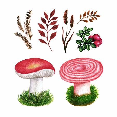 Autumn watercolor set of forest mushrooms, grass, cowberry and branches. Fall season elements. Object isolated on white background.