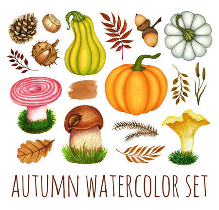 Watercolor autumn set. Pumpkins, mushrooms, chestnut, acorn, pine cone, leaves. Hand drawn fall seasonal plants, objects isolated on white background for design print, Thanksgiving Day decoration