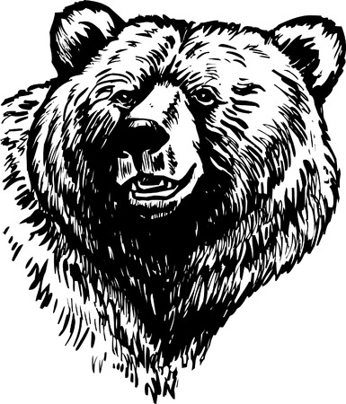 Grizzly Brown Bear Vector Illustration