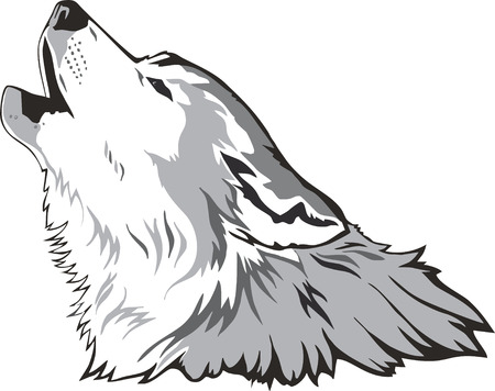 lobo feroz:  Vector de cabeza de lobo