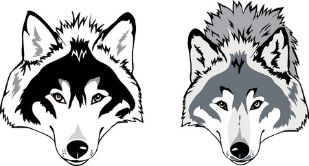the wolf: Testa di lupo Vettoriali