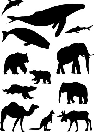 humpback: wild animals.  Illustration