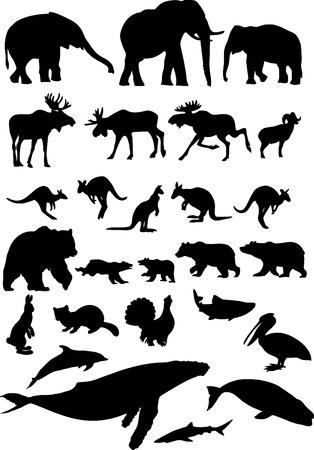 siluetas de elefantes: Colecci�n de animal.