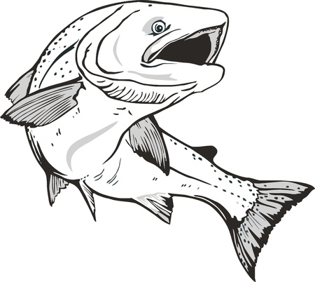 atlantic ocean: Salmon fish Illustration