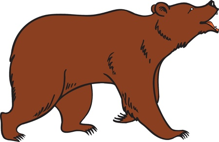 brown bear: Grizzly Brown Bear Vector Illustration