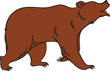 kodiak: Vector de Brown oso grizzly