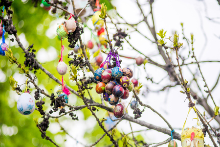 sanctified: Several Easter colored eggs hanging on a tree branch color sunny spring day. Easter Stock Photo