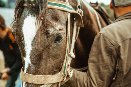 sad eyes of a horse in harness. horse eye close up Stock Photo