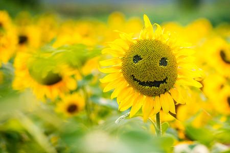 zonnebloemen glimlachend op een veld met zonnebloemen in de zomer, op een zonnige dag Stockfoto