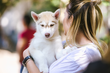 A young Caucasian blonde woman holds a small Siberian husky puppy in her hands. A female husky bitch has a grey white color. Greenery is in the background.