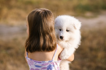 Samoyed dog and girl posing in the park. True friends together. A child is holding a fluffy puppy in his arms