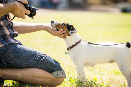 photographer photographing a dog jack russel