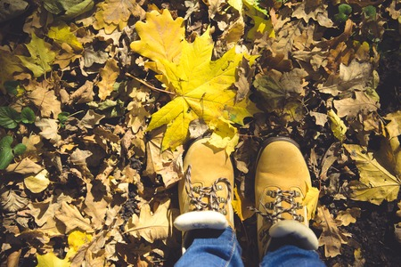 yellow shoes with yellow fallen leaves. Autumn forest, fall scene. Top view with copyspace.