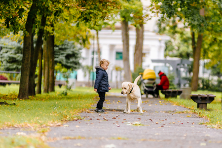 Little boy plays, runs with his dog Labrador in the park in autumn