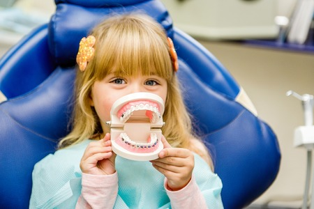 A small child plays with artificial jaws. Childrens dentistry. Dental office.