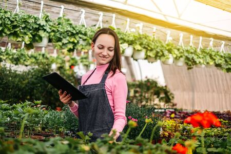 people, gardening, technology and profession concept - happy woman or gardener with tablet computer and flowers in greenhouse