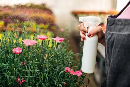 Female hand with a sprayer watering plants in a greenhouse. Plant care, health, ecology. Young woman gardener work in a greenhouse