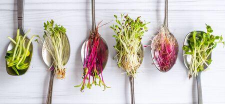 Organic microgreens in spoon, healthy eating concept, diet and slimming, vegan lifestyle Zdjęcie Seryjne