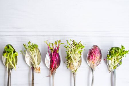 Organic microgreens in spoon, healthy eating concept, diet and slimming, vegan lifestyle Standard-Bild