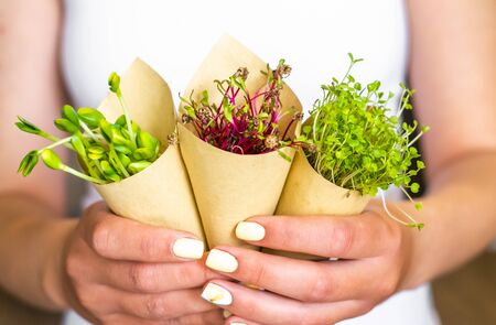 Woman holding sprouts of sunflower beet and radish packed in paper, vegetarian lifestyle