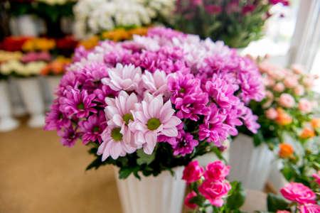 chrysanthemums. chrysanthemums in a pot