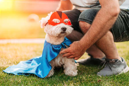 Cute and funny dog in superhero mask and cape posing in front of camera with owner, animal rights concept