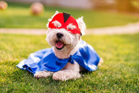 Cute and funny dog in superhero mask and cape posing for camera, animal rights concept Reklamní fotografie