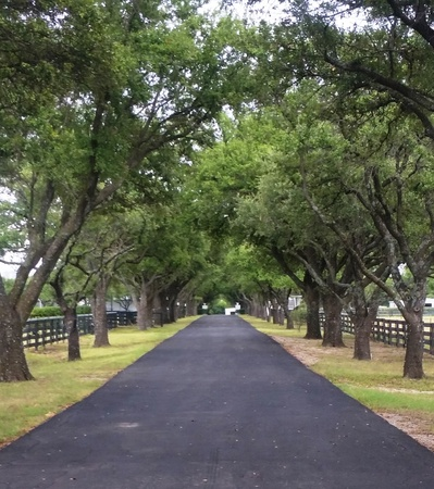 Tree Lined Driveway Imagens