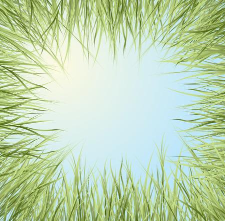 green grass  Stock Vector - 6208761