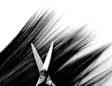 tijeras cortando: mech�n de pelo y tijeras