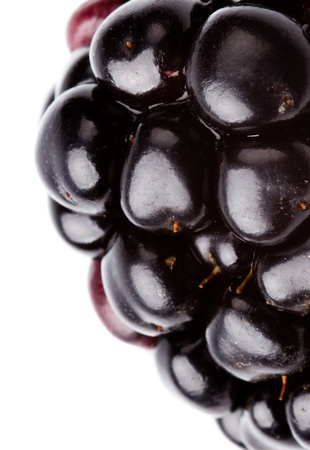 extreme macro of blackberry on white background Stockfoto