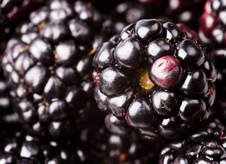 blackberry fruit: many ripe blackberries. food background Stock Photo