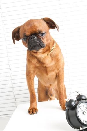 perro furioso: perro rabioso en el lugar de trabajo