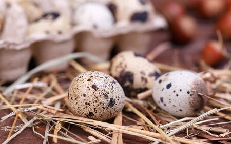 quail eggs photo