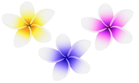 Plumeria three flowers painted in different colors Stock Vector - 13206811