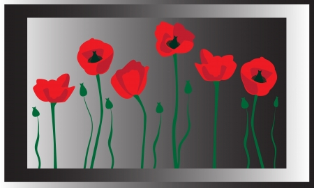 flowering red poppies in a frame on a dark background Vector