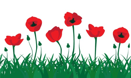 seamless pattern of red poppies and the green grass
