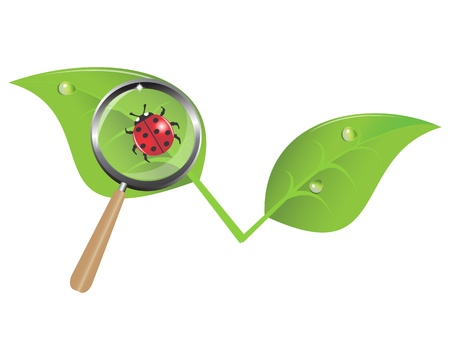 ladybug on a leaf and a magnifying glass Vector