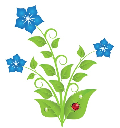 blue flowers with leaves and tendrils, which are decorated with drops. On one of the leaves sitting ladybug. Stock Vector - 15389388