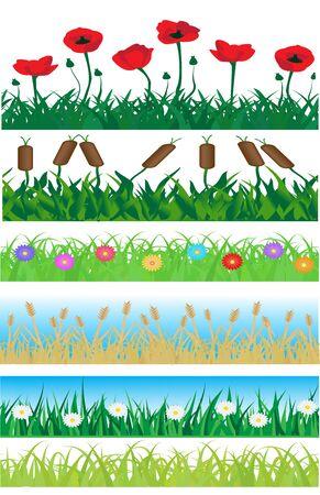 canne: Set composto di erba senza soluzione di continuità, piante e fiori