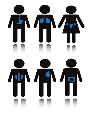Set black silhouette of a man with a blue internal organs Vector