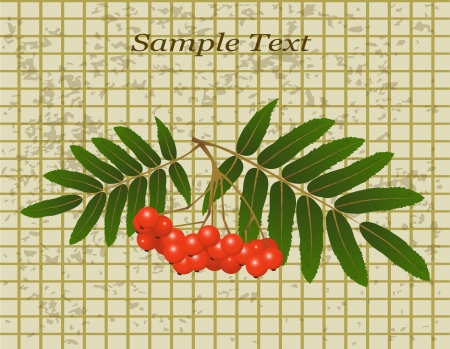 yellowed: bunch of rowan and leaves on the background of stained yellowed paper in the cage Illustration