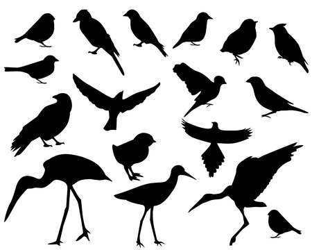 sparrow bird: vector set-black silhouettes of different birds on white background