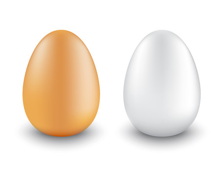 two chicken eggs realistic different colors on a white background       Vector