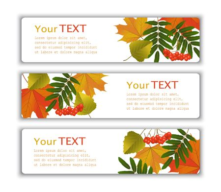 mountain ash: Four advertising banner with yellow autumn leaves and berries of mountain ash Illustration