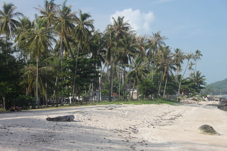 A beach with sand and palms in Samui island in Thailand photo